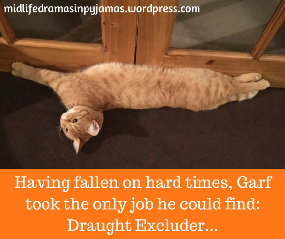 A funny cat MEME from humour blogger, Midlife Dramas in Pyjamas